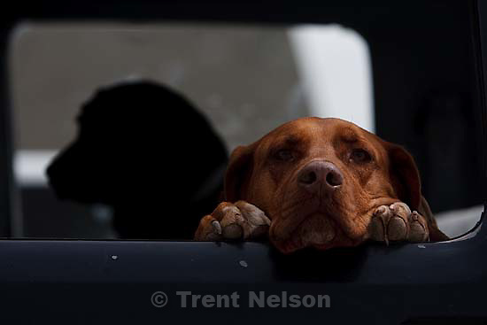 Enterprise - dogs in truck. Saturday May 30, 2009.