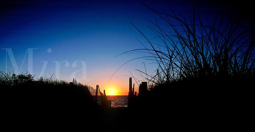 Entrance to beach at sunrise, Cape Cod National Seashore