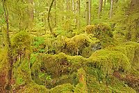 Coastal rain forest. Naikoon Provincial Park. Graham Island. , Haida Gwaii (formerly the Queen Charlotte Islands), British Columbia, Canada