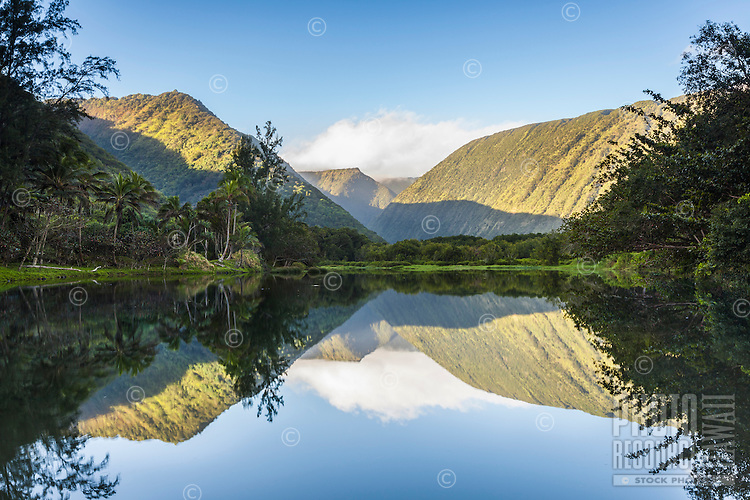 Waipi'o Valley in the morning light is reflected in the glassy surface of a still river surrounded by lush trees, Hamakua Coast, Big Island.