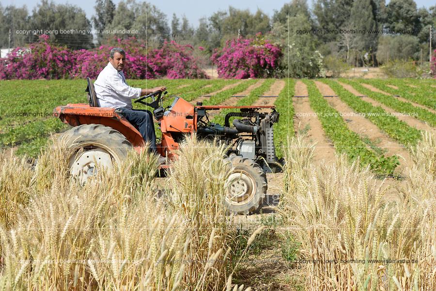 EGYPT, Bilbeis, Sekem organic farm, desert farming, diversity, crop rotation, wheat / AEGYPTEN, Bilbeis, Sekem Biofarm, Landwirtschaft in der Wueste, Ernte von Weizen