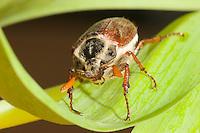 May-Bugs