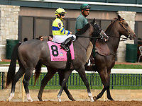 "October 07, 2018 : #8 Credit Swap and jockey Albin Jimenez in the 1st running of The Indian Summer $200,000 ""Win and You're In Breeders' CupJuvenile Turf Sprint Division"" for trainer Mark Casse and owner John Oxley  at Keeneland Race Course on October 07, 2018 in Lexington, KY.  Candice Chavez/ESW/CSM"
