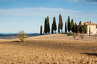 ITALY - Tuscany - Pecorino di Pienza