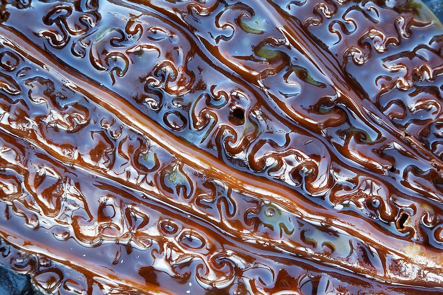Close-up of giant kelp frond, Salt Creek Recreation Area, Clallam County, Washington, USA