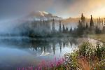 Mount Rainier appears as mist rises off a lake at dawn, Mt. Rainier National Park, Washington, USA