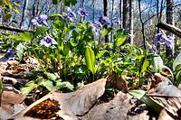Wildflower, Mystery Falls, Arkona Ontario, Rural Lambton County