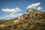 Sheep and mountain peak the Monastery Mileševa, Serbia originally built in the 12th century.
