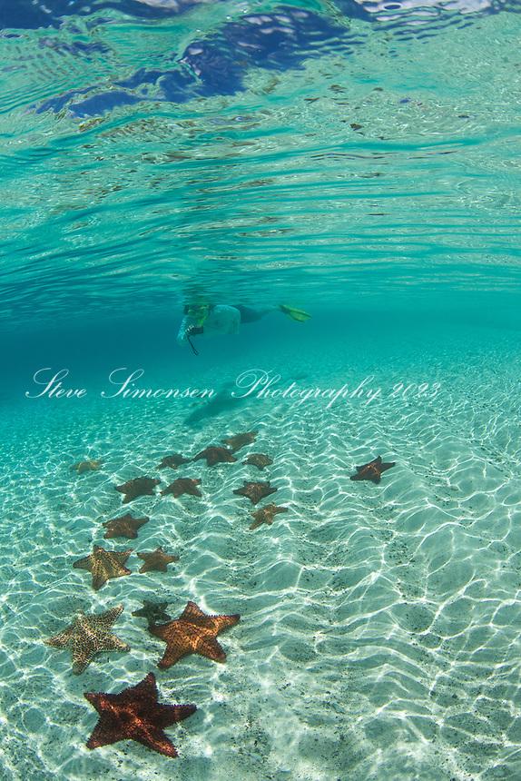Snorkeler with starfish underwater<br /> St. John<br /> US Virgin Islands