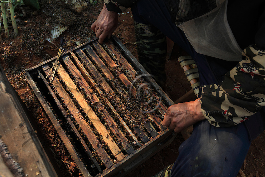 The opening of a hive.
