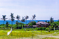Bali, Badung, Canggu. Blue sky and sea and golden rice fields.