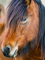 Pony's Gaze