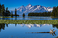 The Teton Range in Wyoming rises above lily pad filled Heron Pond.