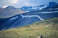 Band of Dall Sheep on tundra in Wrangell Mountains above Sanford River Valley in Wrangell-Saint Elias National Park and Preserve, Alaska, TomBean_Pix_0746