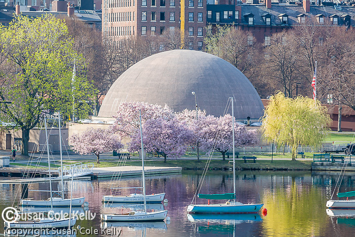 Springtime on the Charles River Esplanade, Boston, MA