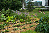 Vegetable garden with straw mulch at historic Creamer's Dairy farmhouse at Creamer's Field, Fairbanks Alaska