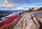 Low sweet blueberry lines the granite cliffs along Beech Mountain in Acadia National Park, Maine, USA