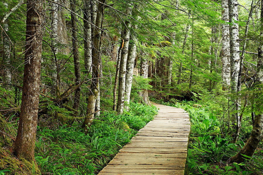 Wooden boardwalk through forest, Longmire, Mount Rainier National Park, Washington, USA