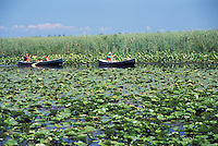 Waterlillies, Grasses and Canoeists in Point Pelee National Park