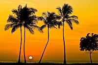 Sun setting behind coconut trees, West Oahu, Hawaii