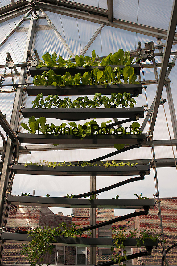 Hydroponic farming is seen on the rooftop Greenhouse Project classroom at the Manhattan School for Children in New York on Saturday, October 6, 2012. The greenhouse collects rainwater for irrigation growing their crops without carbon emissions or waste. The sustainable urban farm was created by the New York Sun Works Center. The lab teaches the students about sustainable food production and environmental science. (© Richard B. Levine)