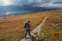 Female hiker hiking through autumn landscape towards Pårte hut, Kungsleden trail, Lapland, Sweden