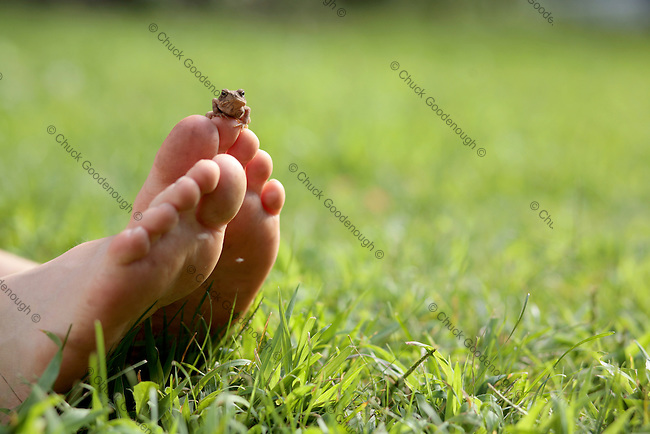 Stock Photo of a Baby Toad Sitting Perched on a Small Boy's Feet in the Grass
