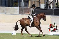 Large Hunter Pony