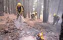 Dos incendios forestales en la zona norte de la provincia de Guadalajara tuvieron en jaque a politicos y 470 efectivos de los servicios de emergencias. Las llamas han afectado a una zona de mas de 3.500 hectáreas