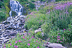 USA, OR, Crater Lake NP, Lewis Monkeyflower at Vidae Falls