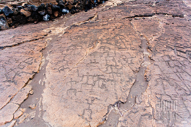 Multiple Hawaiian petroglyphs or ki'i pohaku at Puako Petroglyph Park, Big Island.