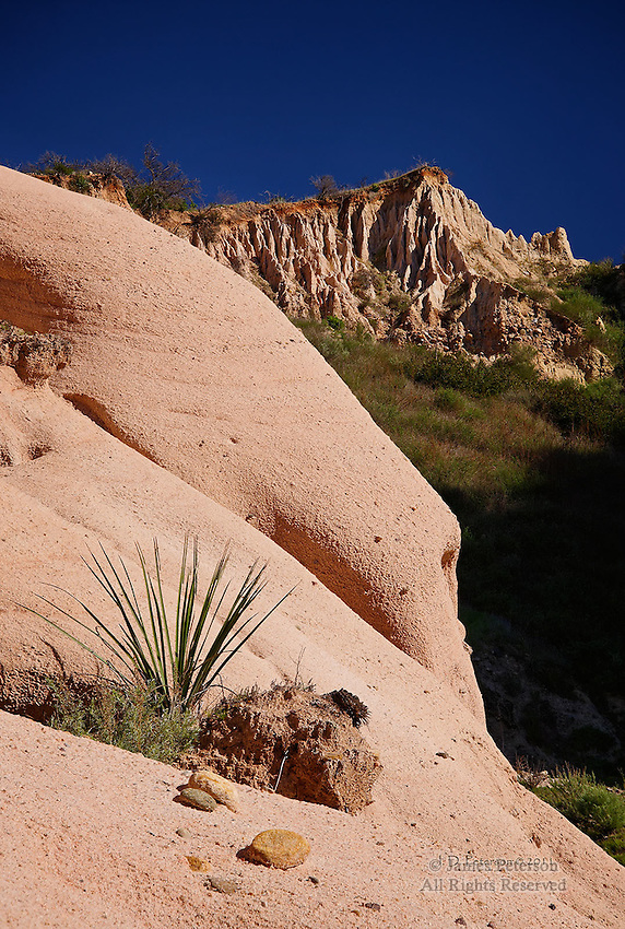 Yucca along Red Rock Trail, Santa Ana Mountains, California.  Availabe in sizes up to 24 x 36 inches.