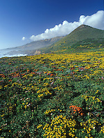Wildflowers in bloom along the Big Sur Coast, California.