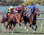 HALLANDALE BEACH, FL - MAR 3:Maraud #2 trained by Todd A. Pletcher with John Velazquez in the irons wins the $100,000 Palm Beach G3 Stakes at Gulfstream Park on March 3, 2018 in Hallandale Beach, Florida. (Photo by Bob Aaron/Eclipse Sportswire/Getty Images)