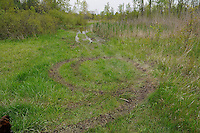 Porky, Perch Creek, wildflowers, dandelions, ATV tracks, phragmites, garlic mustard