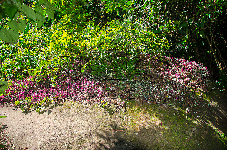 Vegetação na trilha para a piscina natural do Cachadaço, Vila de Trindade - Paraty- RJ, 12/2013.