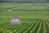 Vineyards outside Chassange Montrachet