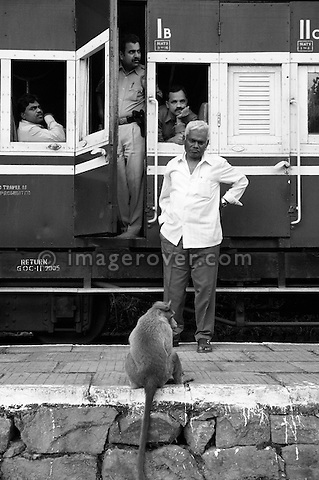 Curious monkey inspecting the Nilgiri Mountain Railway on a stop between Coonoor and Mettupalayam. India, Tamil Nadu.  --- Info: The Nilgiri Mountain Railway (NMR) is the only rack railway in India and connects the town of Mettupalayam with the hill station of Udagamandalam (Ooty), in the Nilgiri Hills of southern India. The construction of the 46km long meter-gauge singletrack railway in Tamil Nadu State was first proposed in 1854, but due to the difficulty of the mountainous location, the work only started in 1891 and was completed in 1908. This railway, scaling an elevation of 326m to 2,203m and still in use today, represented the latest technology of the time. In July 2005, UNESCO added the NMR as an extension to the World Heritage Site of Darjeeling Himalayan Railway.
