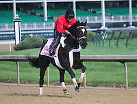 May 1, 2014: Kiss Moon gallops in preparation for the Kentucky Oaks at Churchill Downs in Louisville, KY. Zoe Metz/ESW/CSM