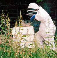 A bee keeper maintaining and checking a bee hive in Knoydart, Scottish highlands, UK