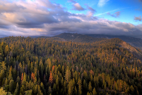 Storm clouds move over Giant Forest during sunset at Sequoia National Park, California