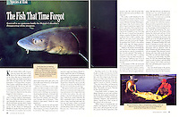 "CANADIAN WILDLIFE Magazine ""The Fish That Time Forgot"" Sturgeon Article - Photography by Dale Sanders."