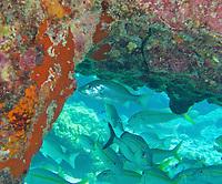 EC-  Ultimate Snorkeling Tour during HAL Konsingdam S. Caribbean Cruise, Grand Turk, Turks & Caicos