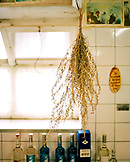 SWITZERLAND, Couvet, hanging woodworm plant is used to make Absinthe, Artemisia Distillerie, Jura Region