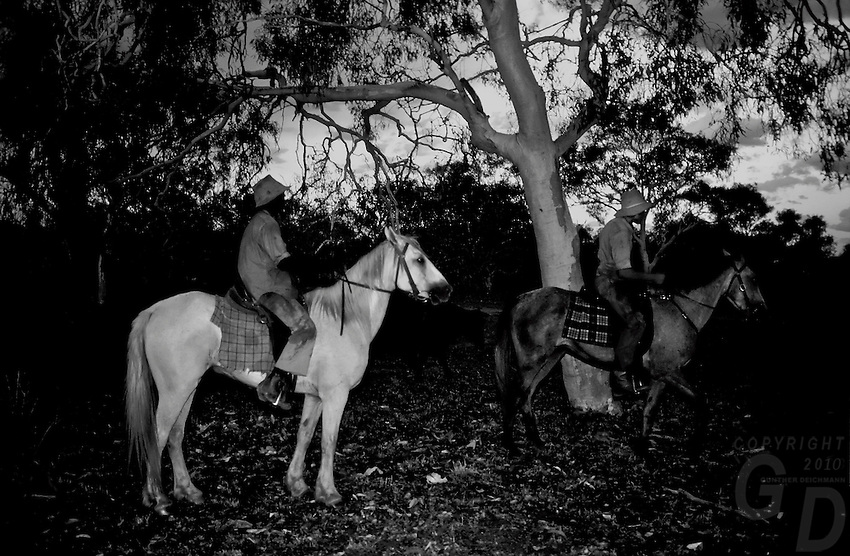 Outback AUSTRALIA Cattle Muster at dusk,Northern territory, Australia