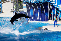 The Dolphin Show at Seaworld, Orlando, Florida, USA.