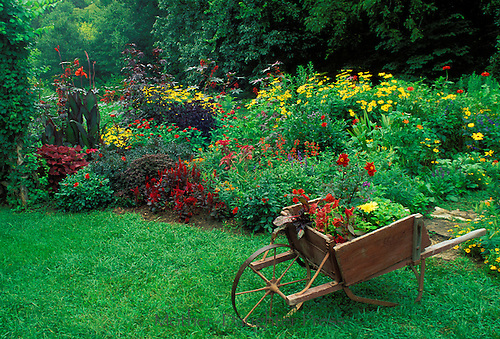 Antique wheelbarrow holding new plants for the garden, touches of red and yellow. Midwest USA