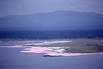 Lesser flamingos at Lake Nakuru National Park