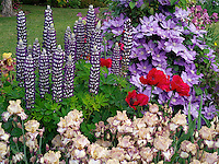 Close up of iris,lupine clematis and poppies. Schrieners Iris Gardens, Salem, Oregon.