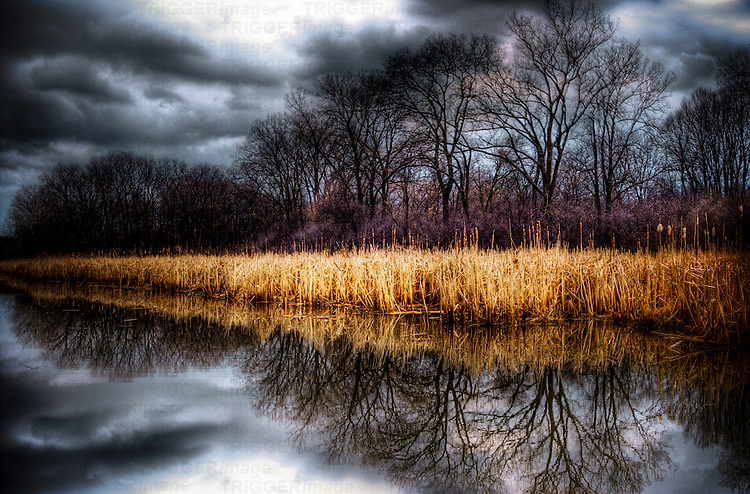 Stormy grey skies reflected in a lake with reeds and trees